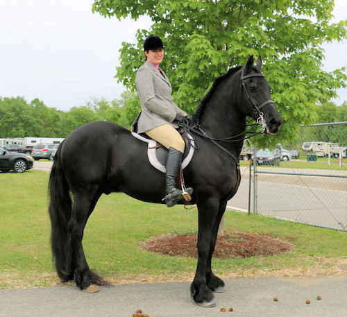 Greater Boston Charity Horse Show May 2018 - Bouke and Kate