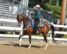 Katelyn Ring's new morgan mare