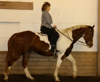 Congrats to Rebecca on the purchase of her new paint gelding