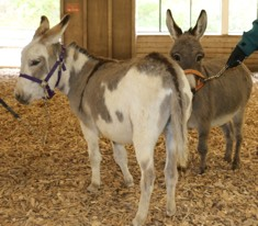 Congrats  to Robin on her purchase of two miniature donkeys