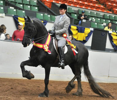 Chrislar's Friesian Bouke competing at a horse show