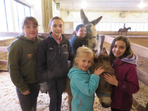 Chrislar group  with mini donkeys