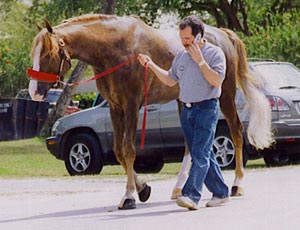 Larry Cassenti walking horse