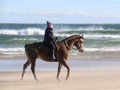Appaloosa gelding loves the beach