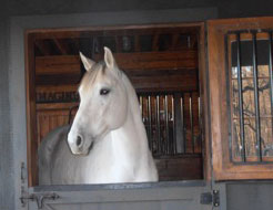 picture of Sneekers a client's horse