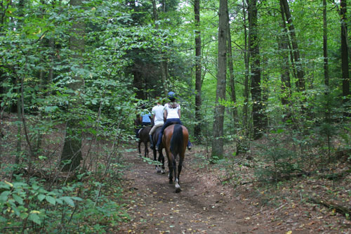 trail riding is one of the activities you can do when you leasing a horse at Chrislar
